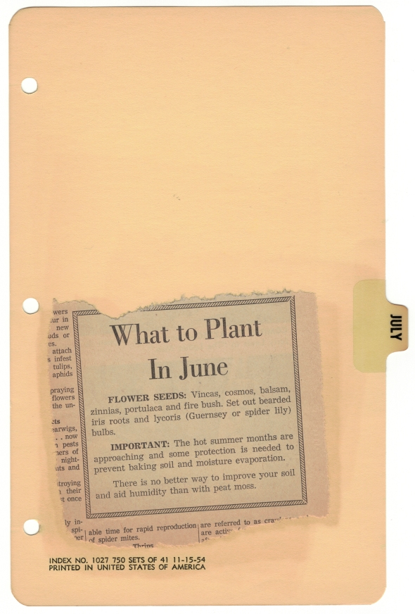 What to plant in June from Betty's Cook Nook